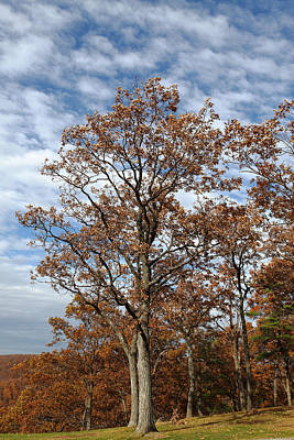 Photograph - Autumn Oaks White Clouds by John Stephens