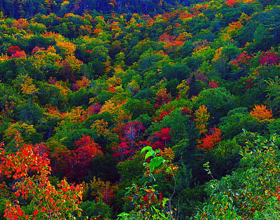 Photograph - Autumn On North Mountain by George Cousins