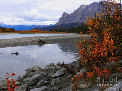 Photograph - Autumn On The Koyukuk by Adam Owen