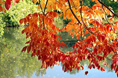 Autumn On The Pond Art Print
