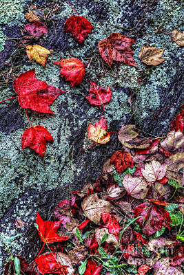 Autumn On The Rocks Art Print by Dan Carmichael