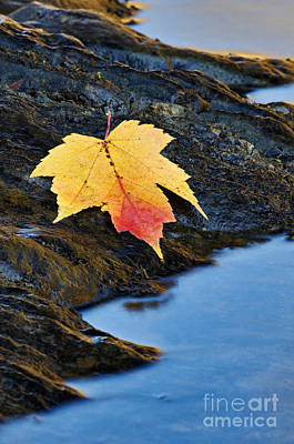 Photograph - Autumn On The Tellico River - D004558 by Daniel Dempster