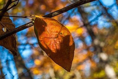 Photograph - Autumn Orange by Gene Hilton