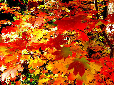 Photograph - Autumn Palette by Cindy Wright