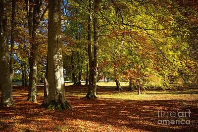Photograph - Autumn Park by Lutz Baar