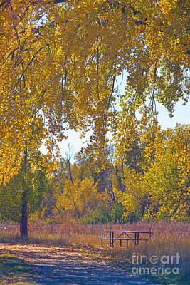 Aspen Trees Photograph - Autumn Picnic Spot by James BO  Insogna