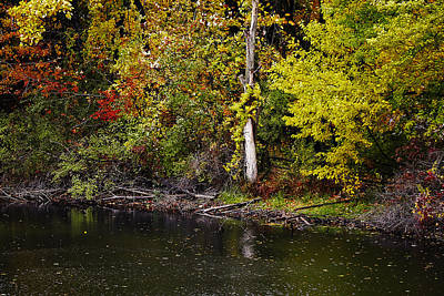 Photograph - Autumn Pond by Scott Hovind