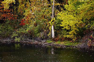 Photograph - Autumn Pond by Scott Hovind