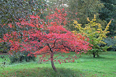 Photograph - Autumn Red by Tony Murtagh