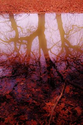 Autumn Reflections  Art Print by Xoanxo Cespon
