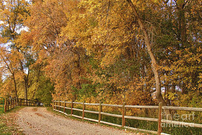 Autumn  Road To The Ranch Print by James BO  Insogna