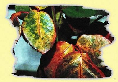 Global Design Shibori Inspired - Autumn Rose Leaves by Will Borden