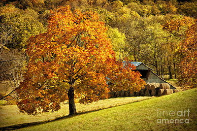 Autumn Rustic Barn Art Print by Cheryl Davis