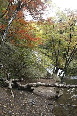 Photograph - Autumn Scene by Masami Iida