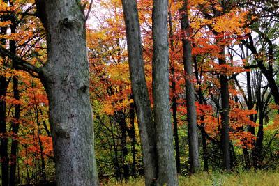 Photograph - Autumn by Scott Hovind