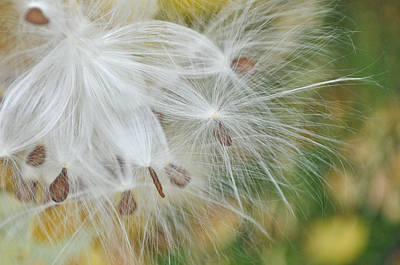 Photograph - Autumn Seeding by Colleen Coccia