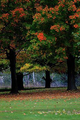 Photograph - Autumn Silhouette by Scott Hovind