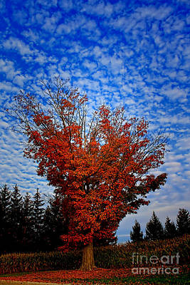 Photograph - Autumn Sky Drama by Cathy Beharriell