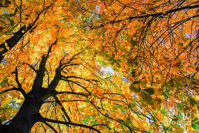 Autumn Sky Art Print by Hannes Cmarits