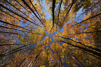 Autumn Sky Art Print by Mircea Costina Photography