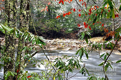 Autumn Snow Cranberry River Rhododendron Art Print by Thomas R Fletcher