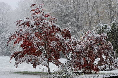 Warren Connecticut Photograph - Autumn Snow II by Andrea Simon