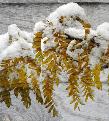 Art Print featuring the photograph Autumn Snow by Michelle Frizzell-Thompson