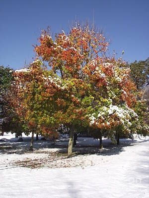 Photograph - Autumn Snow by Michelle Welles