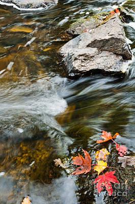 Autumn Stream Art Print by Cheryl Baxter