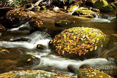 Photograph - Autumn Stream by Lena Auxier