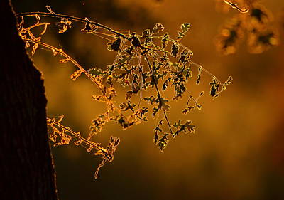Photograph - Autumn Sun by Rima Biswas