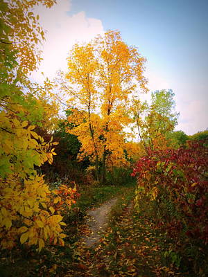 Photograph - Autumn Trail by Kay Novy