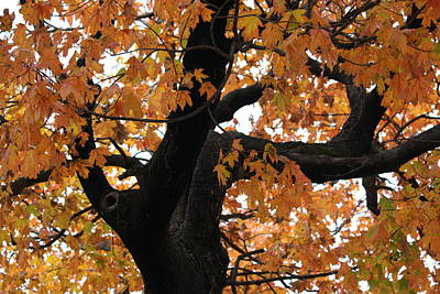 Photograph - Autumn Tree by Donna G Smith