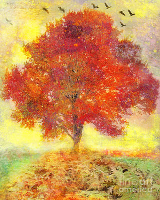 Photograph - Autumn Tree by Gina Signore