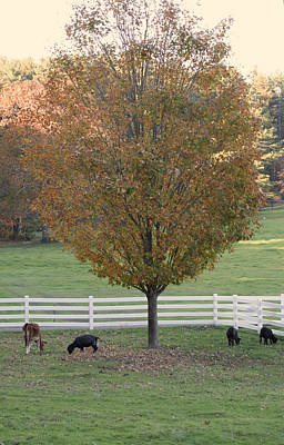 Photograph - Autumn Tree  by Margie Avellino