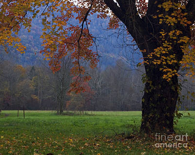 Photograph - Autumn Tree Smokies Fall Smoky Mountains by Nature Scapes Fine Art