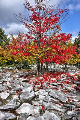 Autumn Trees And Rocks - Fall Colors Art Print by Dan Carmichael