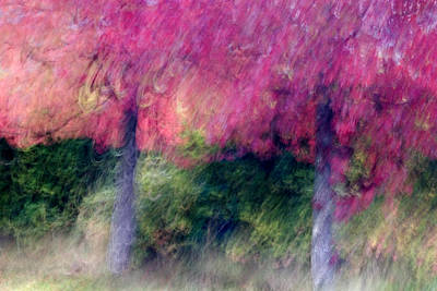 Abstract Movement Photograph - Autumn Trees by Carol Leigh