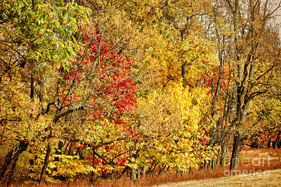 Photograph - Autumn Trees by Cheryl Davis