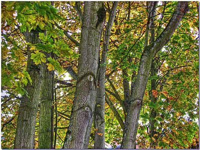 Photograph - Autumn Trees by Chris Anderson