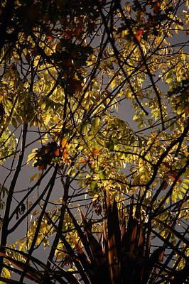 Autumn Trees IIi Art Print by Dickon Thompson