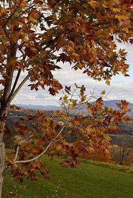 Autumn Trees Art Print by Margaret Steinmeyer