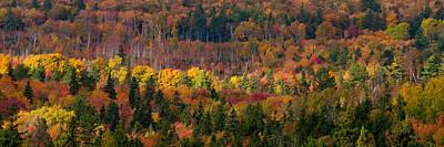 Autumn Trees Panorama Art Print by Matt Dobson