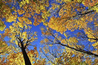 Autumn Treetops Art Print by Elena Elisseeva