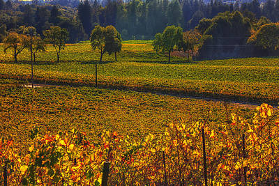 Autumn Vineyards Art Print by Garry Gay