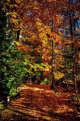 Autumn Walk Art Print by David Patterson