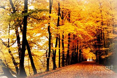 Autumn Photograph - Autumn Walk In Belgium by Carol Groenen