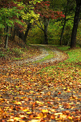 Autumn Walk In The Forest Art Print