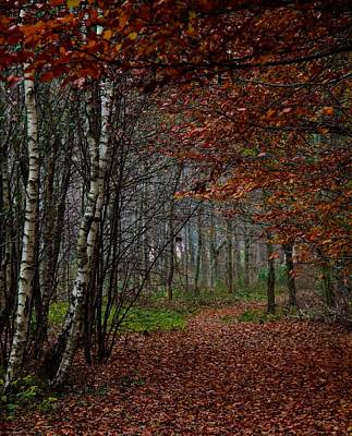 Fallen Leaf Photograph - Autumn Walks by Odd Jeppesen