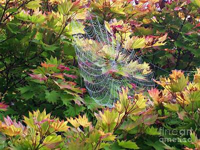 Photograph - Autumn Web by Helen  Campbell